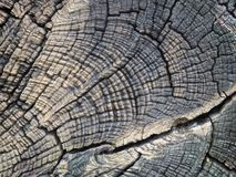 Close up of beautiful cut tree stump textured. And background. Abstract image stock photography