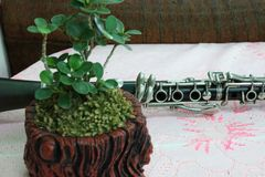 Close up, beautiful dark green leaves in nature, clarinet placed on the table. Close up beautiful dark green leaves nature clarinet placed table stock images