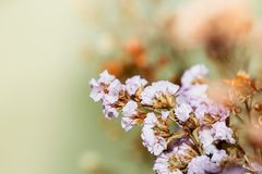 Close up Beautiful dried flowers on bright background blur. royalty free stock photography