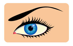 Close up of beautiful eye. Close up of beautiful natural female eye Stock Photography