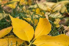 Season, foliage and background element Royalty Free Stock Images