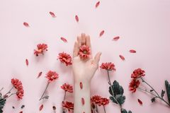 Close-up beautiful female hands with purpure flowers on pink background. Cosmetics for hands anti wrinkle. royalty free stock image