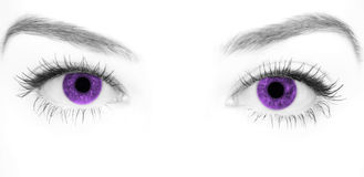 Close-up beautiful female purple eye Royalty Free Stock Photo