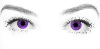 Close-up beautiful female purple eye royalty free stock photo