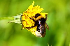 Close up of a beautiful flower and bee royalty free stock photography