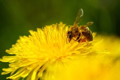 Close up of a beautiful flower and bee royalty free stock photos