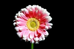 Close up of a beautiful flower royalty free stock photography