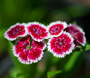 Close up beautiful  flower. Close up beautiful  flower in the park of Thailand Stock Photos