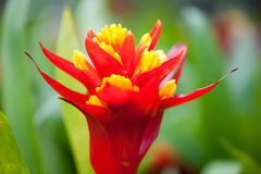 Close up beautiful  flower. Close up beautiful  flower in the park of Thailand Royalty Free Stock Photography