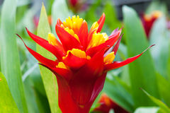 Close up beautiful  flower. Close up beautiful  flower in the park of Thailand Stock Photo