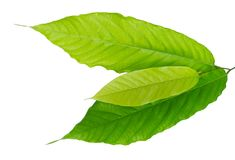 Fresh Green Leaves Laying on White Background Stock Photo