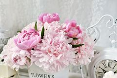 Close up of beautiful peony bunch Royalty Free Stock Images