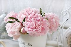 Close up of beautiful peony bunch Royalty Free Stock Photography