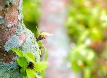 Beautiful green lichen, moss and algae growing on tree trunk. Close-up of beautiful green lichen, moss and algae growing covered on tree trunk in the garden stock photo