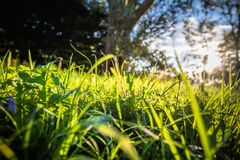 Close up of Beautiful green meadow and trees with sun back lighting Royalty Free Stock Photography