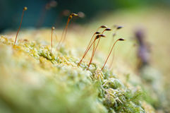 Close-up beautiful green moss in the forest / Fresh and nice tree in the garden Royalty Free Stock Photos