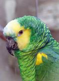 Close up of a beautiful green parrot. In a park stock image