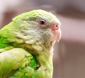 Close up of a beautiful green parrot. In a park stock images