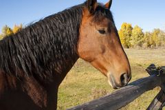 Close up of a beautiful horse royalty free stock image