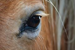 A close up of a beautiful horses eye stock image
