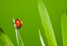 Close up of beautiful ladybug Stock Photo