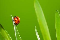 Close up of beautiful ladybug Stock Photo