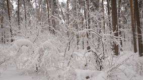 Close up of beautiful landscape of snow-covered naked trees in the winter forest. Wonderful frozen scenery of nature stock footage