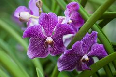 Close up beautiful lilac orchid. Macro photo, purple flower royalty free stock image