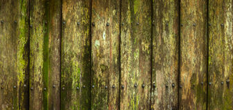 Close-up of beautiful moldy palings background Royalty Free Stock Photo