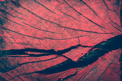 Close up beautiful nature texture of red tree stump Royalty Free Stock Images