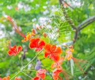 Close up of beautiful orange flowers Royalty Free Stock Image