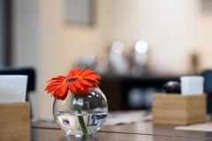 Beautiful orange gerbera royalty free stock photos