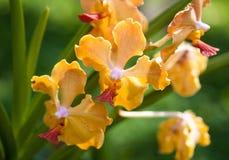Close up beautiful orange orchid. Macro photo stock images