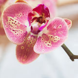 Close-up of beautiful orchid flower background to all the wonderful moments of life. Square. With place for your text. Close-up of beautiful orchid flower Stock Image