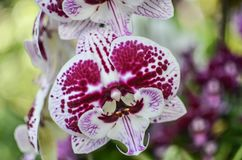 A Close Up of Beautiful Orchids royalty free stock images