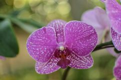 A Close Up of Beautiful Orchids stock photos