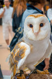 Close up of a beautiful owl posing over a woman wrist in the street in Akihabara owl cafe - owls are very popular pets. In Japan stock photo