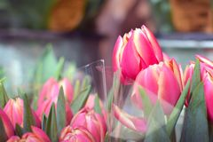 Beautiful pink blooming tulip spring flower as part of flower bouquet on plant stand stock photo