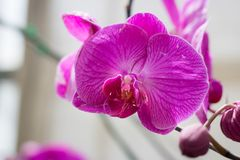Close up beautiful pink orchid growing in garden. Stock Photos