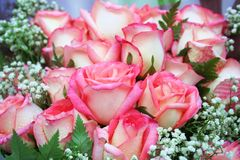 Beautiful pink rose flowers bouquet,vertical royalty free stock photos