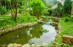Close up of a beautiful pond, in western Ecuador, at 1,400m elevation in Mindo, Pichincha Royalty Free Stock Photo