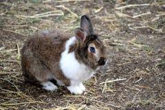 Rabbit, closeup on a rabbit stock images