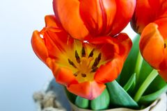 Bouquet of red tulips in a vase from above Royalty Free Stock Photography