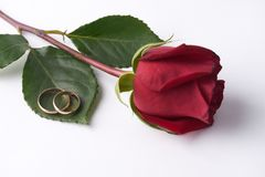 Close-up of a beautiful romantic red Rose with two wedding gold rings Stock Photos
