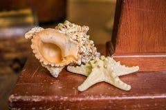 Close-up of a beautiful shell Stock Photo