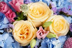 Close up of beautiful soft colour flower bouquet with blue Hydra. Ngea, peach roses, pink lisianthus, ping pong mums and astrantia royalty free stock image