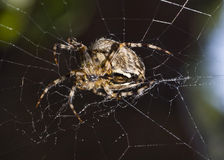 Close-up of Beautiful spider Stock Photos