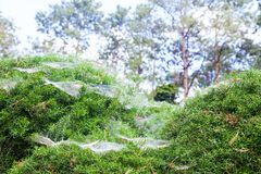 Close Up Beautiful spider web on green bush Stock Images