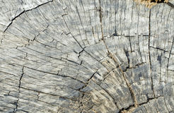 Close up of beautiful tree stump. Color effect in the sunlight Stock Photo
