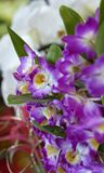 Close-up of beautiful vibrant purple orchid. In a botanic city park Stock Photos